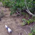 Lily το σκυλί downhill